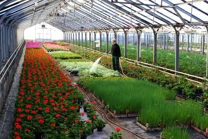 Gärtnerei Beet- Und Balkonpflanzen