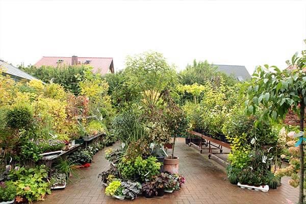 Gartenmarkt Blumen Pflanzen