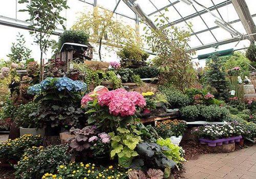 Gartenmarkt Pflanzen und Blumen